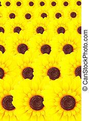 黄色, 向日葵