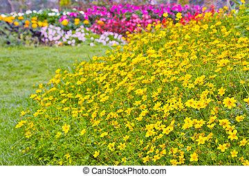 黄色, 宇宙花