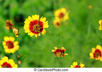 黄色, 春, flowe, 背景