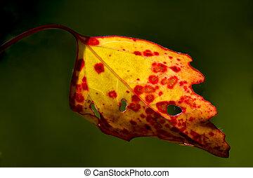 黄色, 秋, 赤
