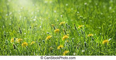 黄色, 美しい, 春の花, 背景
