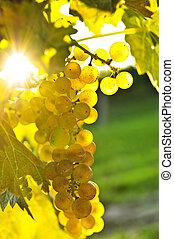 黄色, 葡萄