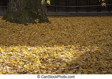 黄色, ginko, 休暇, 秋, 背景