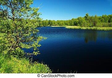黑暗, 曠野, 湖, 在, th