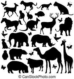 黑色半面畫像, 動物