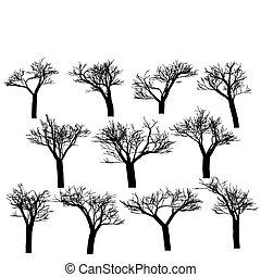 黑色半面畫像, 樹