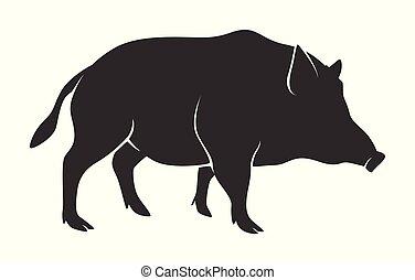 黑色半面畫像, ......的, 疣豬, 被隔离, 在懷特上, 背景