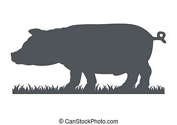黑色半面畫像, ......的, 豬, 被隔离, 在懷特上, 背景。
