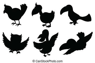 黑色半面畫像, ......的, 鳥