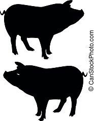 黑色半面畫像, 豬, 在懷特上, 背景