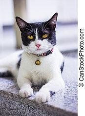 黑色&白色, 貓