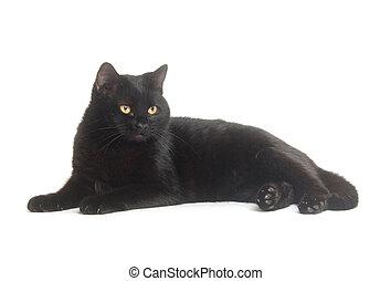 黑色的貓, 在懷特上