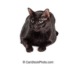 黑色的貓, 放下, 在懷特上