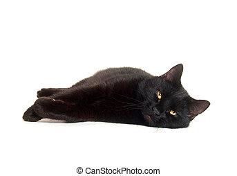 黑色的貓, 放下