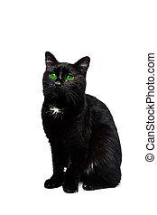黑色的貓, 被隔离, 在上方, 白色