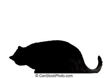 黑色的貓, 黑色半面畫像