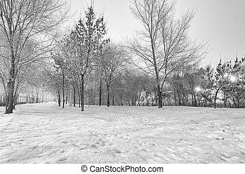 黒い、そして白い, 冬の景色