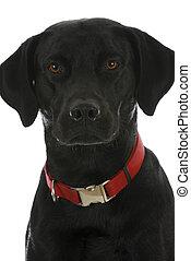 黒い犬, 肖像画