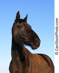 黒い馬, 上に, 空, 背景
