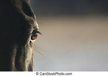 黒い馬, 目