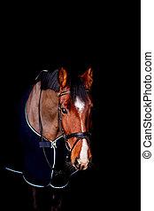 黒い馬, 美しい, 湾, 肖像画, 背景, 敷物