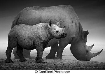 黒い rhinoceros, 子牛, そして, 牛