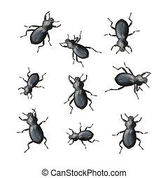 黒, かぶと虫