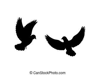 黒, ハト, シルエット, 鳥, animal.