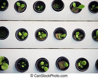 黒, ビジネス, わずかしか, pot., 植物, hydroponics, farm., 緑, concept., 農業