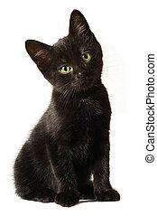 黒, 子ネコ