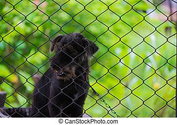 黒, 攻撃的である, 犬, 中に, ∥, cage.