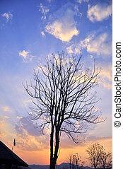 黒, 木, 上に, 青い空
