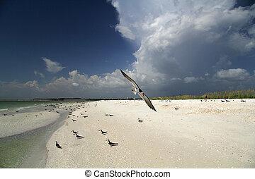 黒, 浜, tigertail, スキマー