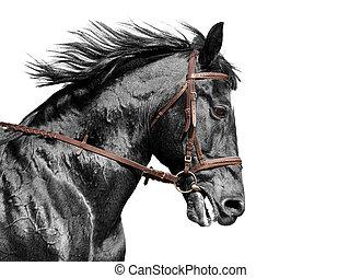 黒, 添え金, ブラウン, 肖像画, 白い馬