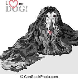 黒, 猟犬, 品種, ベクトル, 国内 犬, アフガニスタン