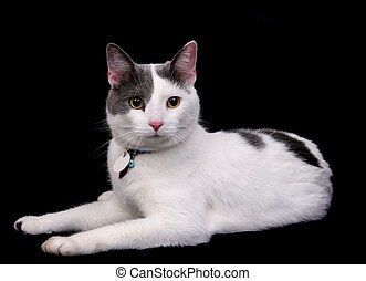 黒, 白, キティ