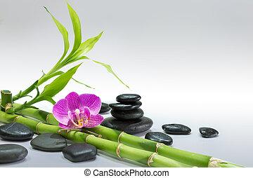 黒, 蘭, 紫色, 竹