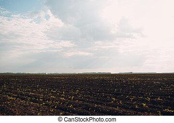 黒, 農業, 土壌, sky., 地球, field.