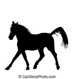 黒, sillhouette, 背景, 馬, 隔離された, 白