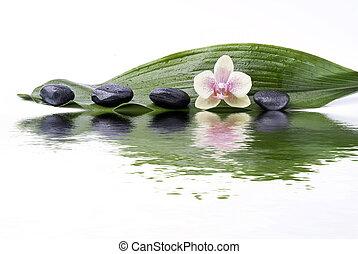 黒, wellness, 環境, 石, 蘭