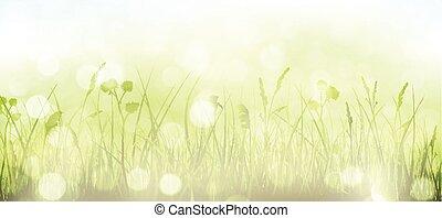 點, 春天, 天空, 草, bokeh, 綠色的背景, 光, 模糊