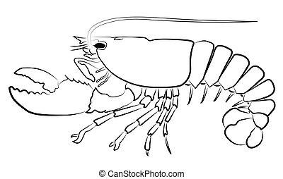 龍蝦, 黑色半面畫像, 被隔离, 上, whi