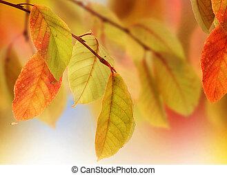 가을의 잎, 디자인