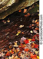 가을의 잎, 호수