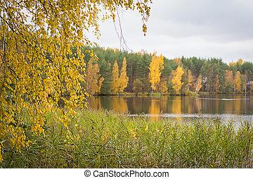 가을, 가을, 호수, 에서, 그만큼, 숲