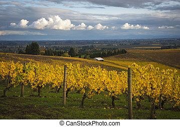 가을, 골짜기, willamette, 오레곤, 포도 동산