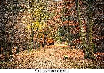 가을, 공원, 통로