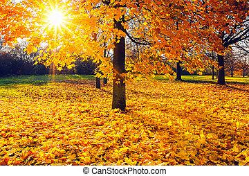 가을, 명란한, 잎