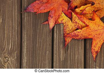 가을, 배경, 와, 단풍나무 잎