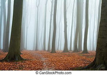 가을, 봄 안개가 덮인, 너도밤나무, 숲
